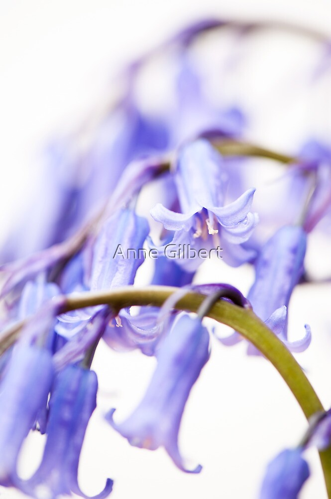 Bluebell Abstract I by Anne Gilbert