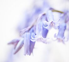 Bluebell Abstract III by Anne Gilbert