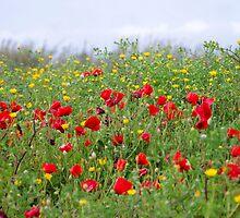Poppy field by Jessy Willemse