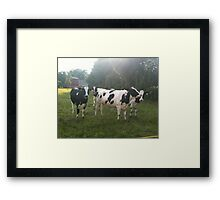 German Cows Framed Print