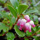 Bearberry - Arctostaphylos uva-ursi by Digitalbcon