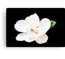 Magnolia on Black Canvas Print