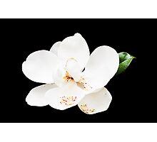 Magnolia on Black Photographic Print