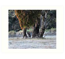 Kangaroos of Hill End NSW Australia Art Print