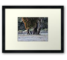 Kangaroos of Hill End NSW Australia Framed Print