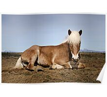 THE ICELANDIC HORSE Poster