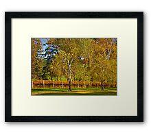 Autumn Vineyard 2012 Framed Print
