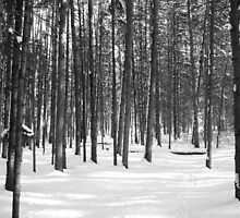 Winter in the woods by Jim Sauchyn