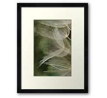 Salsify Seeds Framed Print