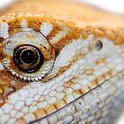 Dragon has his eye on you by starbucksgirl26