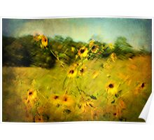 Black-Eyed Susans on a Summer Day Poster