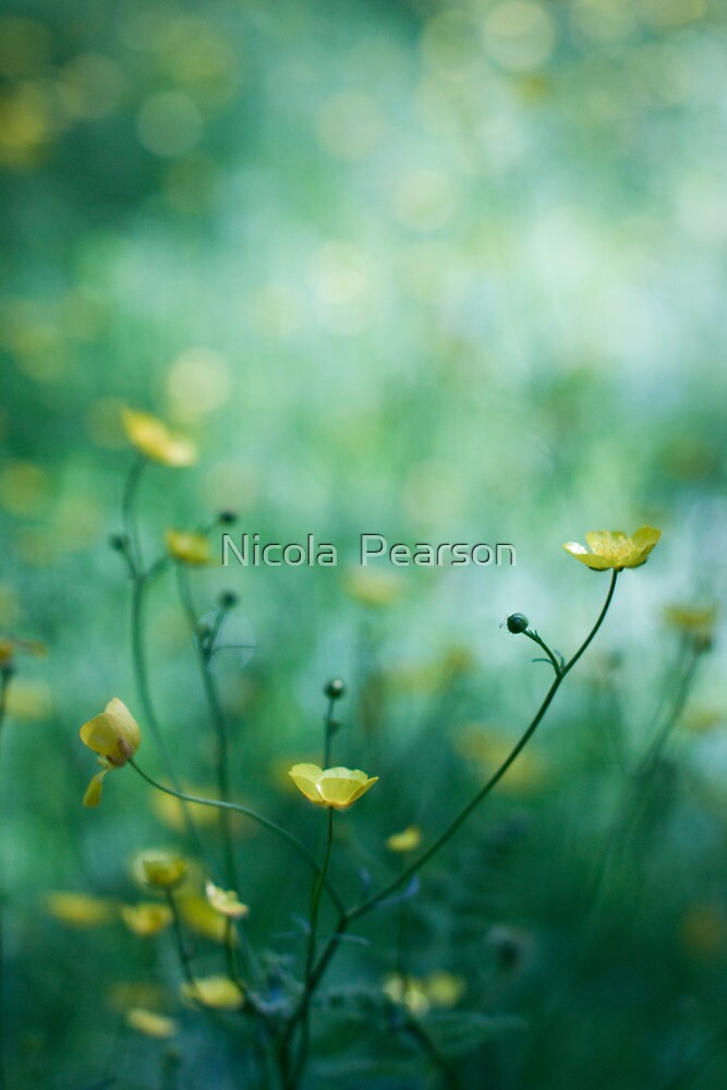 Buttercups  by Nicola  Pearson