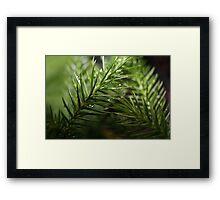 Bonsi Dropletts  Framed Print