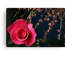 Astounding Blossom ~ Pink Rose Canvas Print