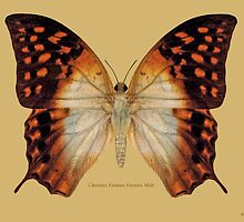 Charaxes Varanes Varanes Butterfly by Walter Colvin