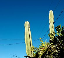 you're cactus by Bronwen Hyde