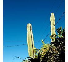 you're cactus Photographic Print