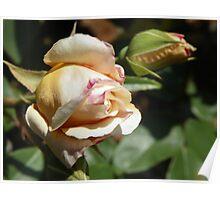 Rose Bud Poster
