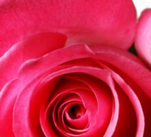 Astounding Blossom ~ Pink Rose Sticker
