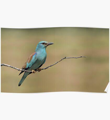 Blue Bird.............. Poster