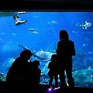 At the Aquarium by debidabble