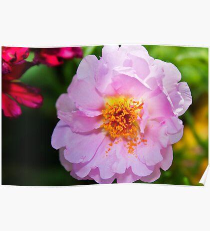 A Flower in my Garden Poster