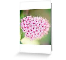 tiny pink flowers... Greeting Card