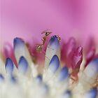 ant ... by karenanderson