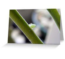 Little Green Mystery Bug - Spittlebug? Greeting Card