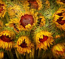 Flowers - Sunflowers - You're my only sunshine by Mike  Savad