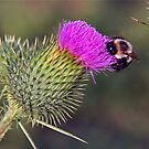 Happy to Bee…. by Mary Fox