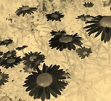 Daisies in Negative and Sepia by taiche