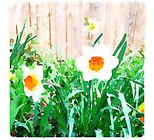 Painted Daffodils Photographic Print