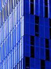 BLUE JAY by cammisacam