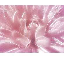 Softly Pink Photographic Print