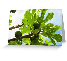 Figs of Ephesus Greeting Card