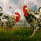 Roosters by ajgosling