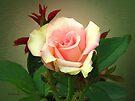 Creamy Blush by RC deWinter