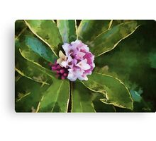Beautiful in Pink Canvas Print