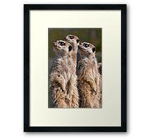 Watching Meerkats Framed Print