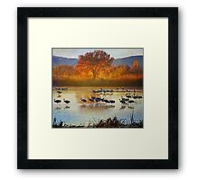 the cranes return Framed Print