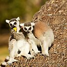 Lemurs Don't Share by Josie Eldred