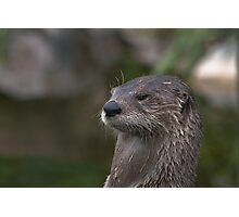 Otter.. Photographic Print