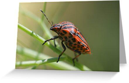 Italian Striped-Bug by marens