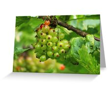 Red Currants - Soon Ripe Greeting Card