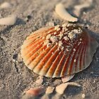 Come out of your Shell... by Ticker