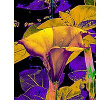 sureal abstract Photographic Print