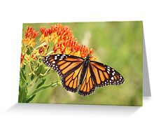 Monarch Butterfly on Butterfly Milkweed Greeting Card