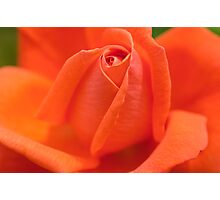 Orange High Sheriff  Rose Photographic Print