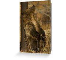 Grizzly Cub-Signed-#5137 Greeting Card